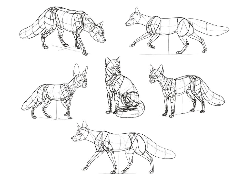 how-to-draw-foxes-steps-9