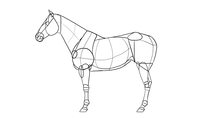 how-to-draw-horses-breeds-1-quarterhorse-1