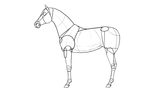 how-to-draw-horses-breeds-2-arabian-1