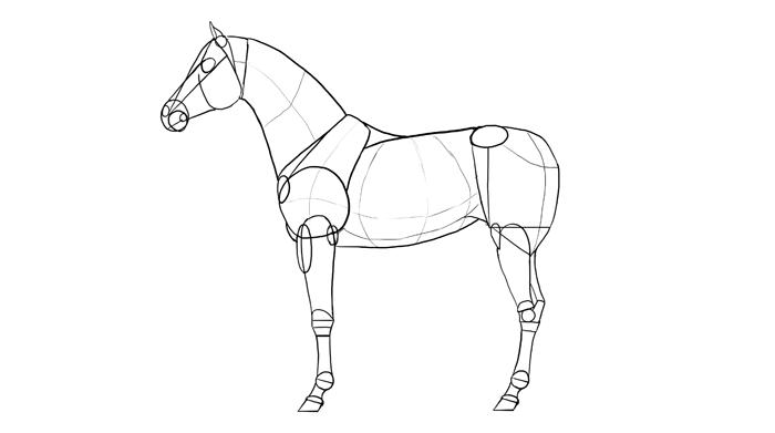how-to-draw-horses-breeds-2-arabian-1