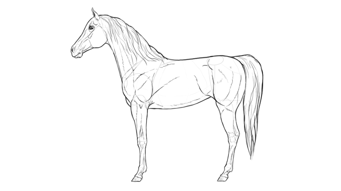 how-to-draw-horses-breeds-2-arabian-2