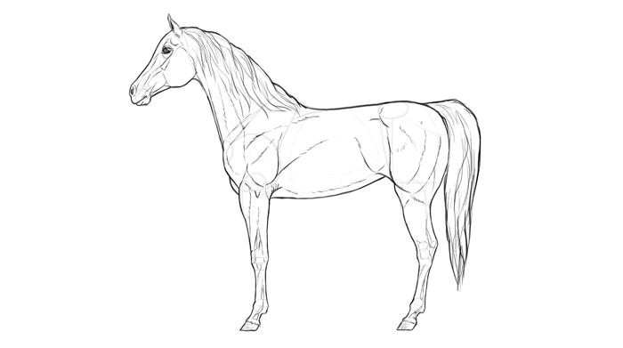 how-to-draw-horses-breeds-2-arabian-2
