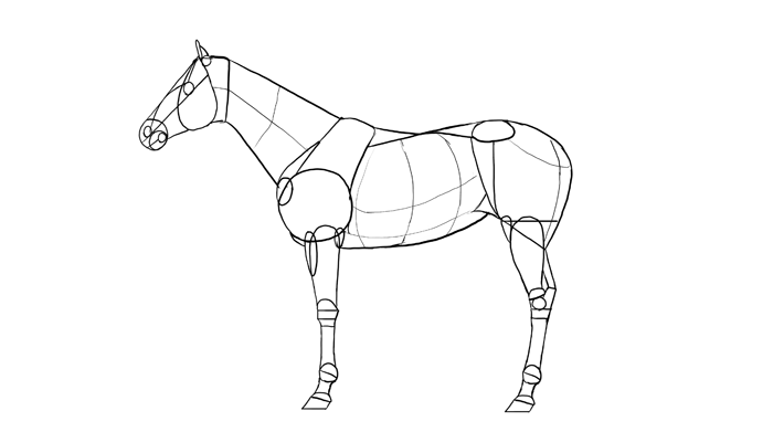 how-to-draw-horses-breeds-3-thoroughbred-1