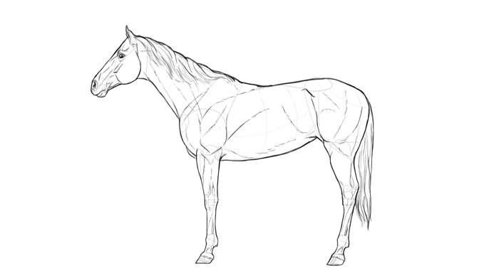 how-to-draw-horses-breeds-3-thoroughbred-2