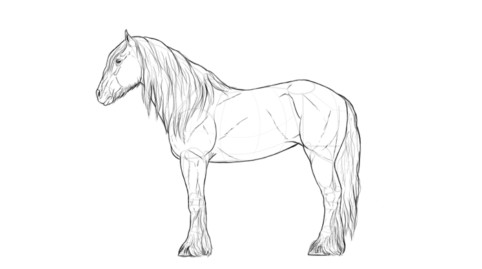 how-to-draw-horses-breeds-4-shire-2