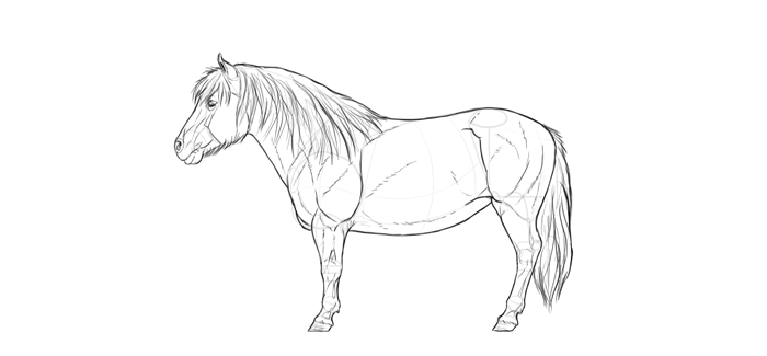 how-to-draw-horses-breeds-5-shetland-2