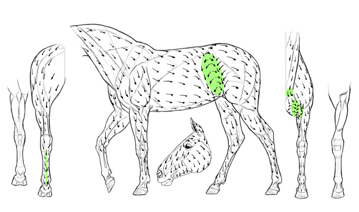 how-to-draw-horses-fur-direction