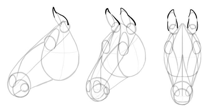 how-to-draw-horses-head-12