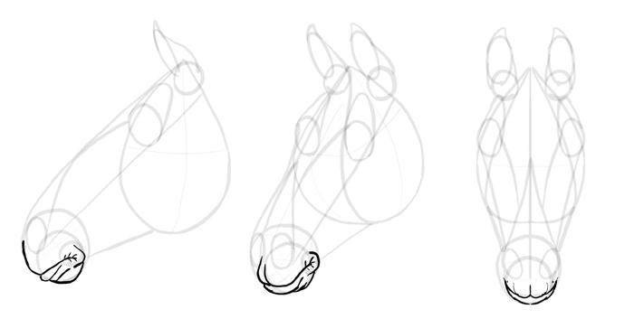 how-to-draw-horses-head-13