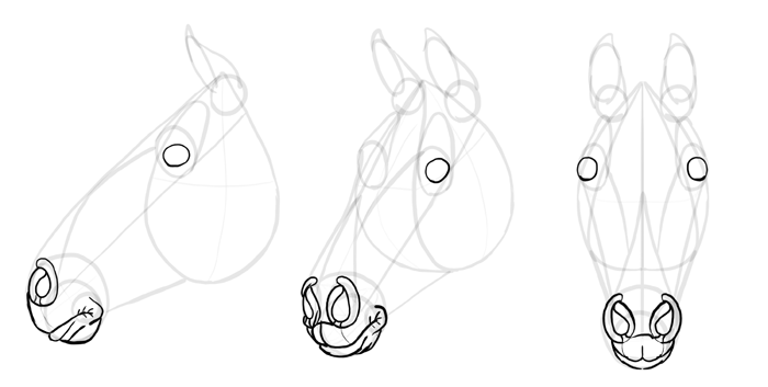 how-to-draw-horses-head-16