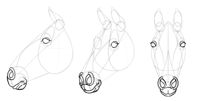 how-to-draw-horses-head-17
