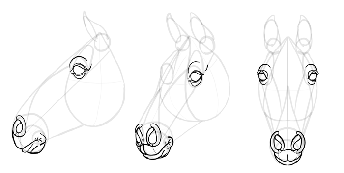 how-to-draw-horses-head-21