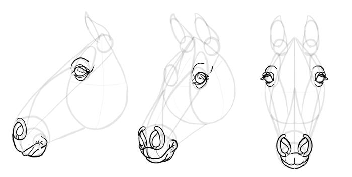 how-to-draw-horses-head-22