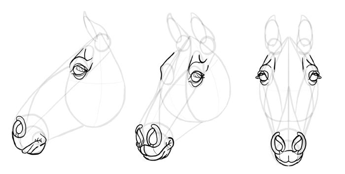 how-to-draw-horses-head-23
