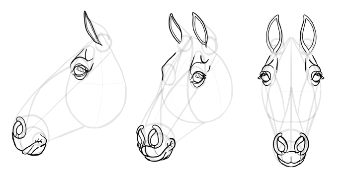 how-to-draw-horses-head-24