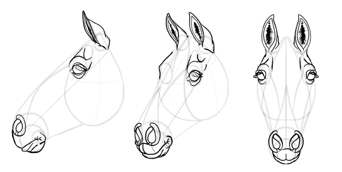 how-to-draw-horses-head-26