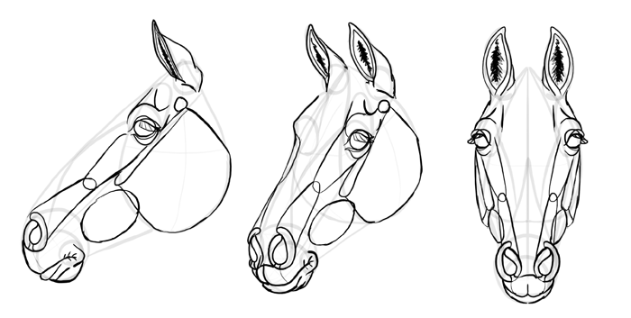 how-to-draw-horses-head-29