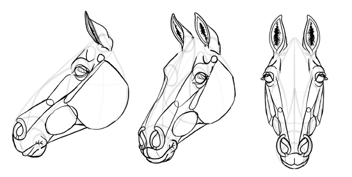 how-to-draw-horses-head-30