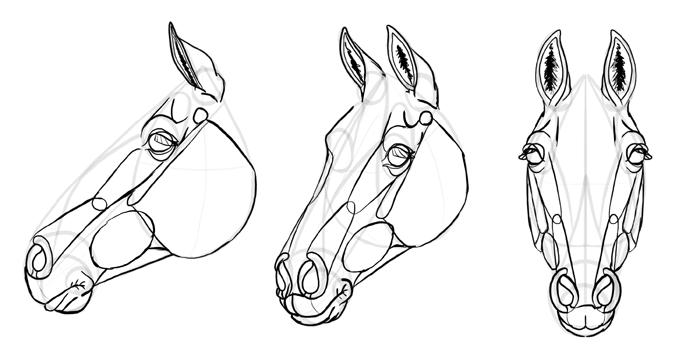 how-to-draw-horses-head-30