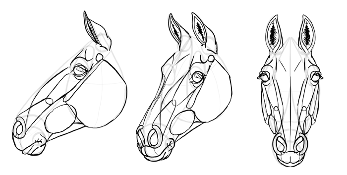 how-to-draw-horses-head-31