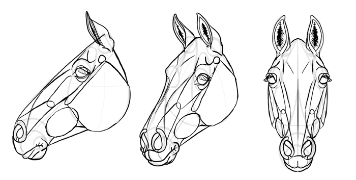 how-to-draw-horses-head-32