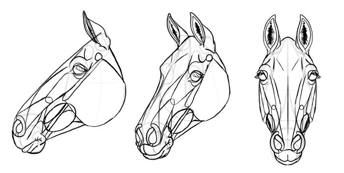 how-to-draw-horses-head-34