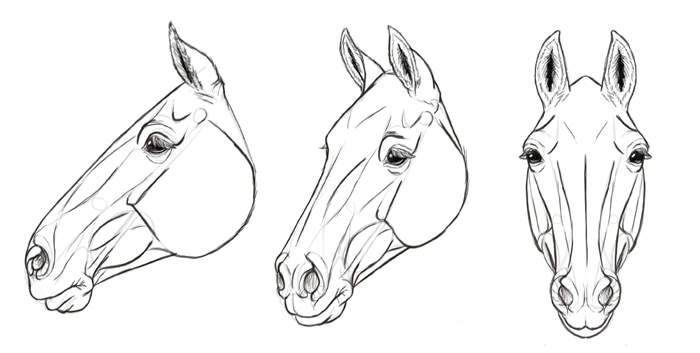 how-to-draw-horses-head-35