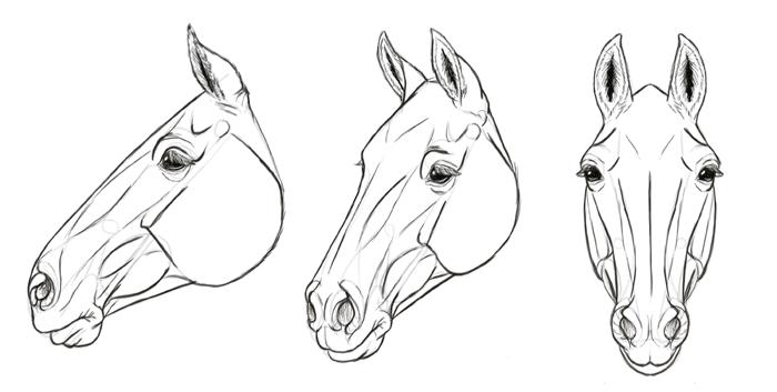 how-to-draw-horses-head-35