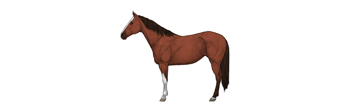 how-to-draw-horses-horse-coat-colors-markings
