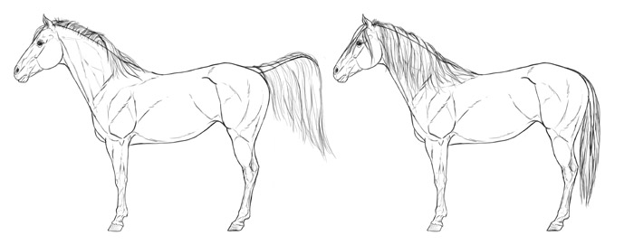 how-to-draw-horses-mane-tail