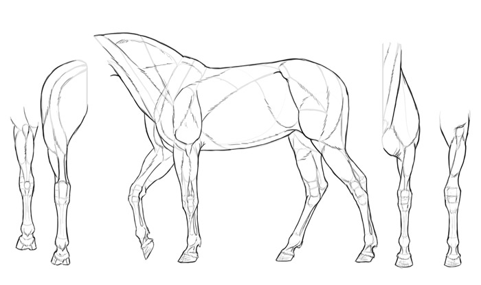 how-to-draw-horses-muscles-drawing