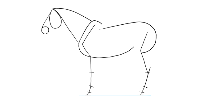 how-to-draw-horses-proportions-4