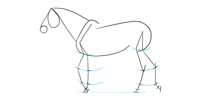 how-to-draw-horses-proportions-5