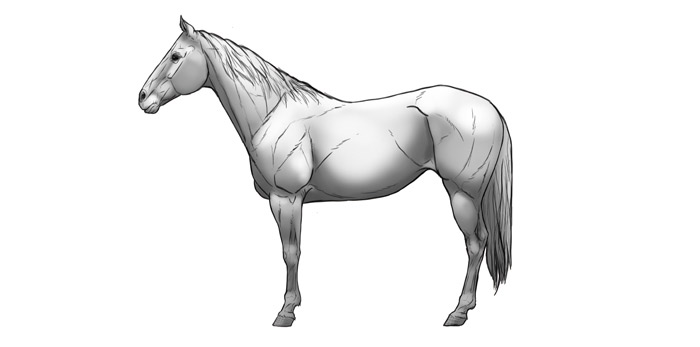 how-to-draw-horses-shading