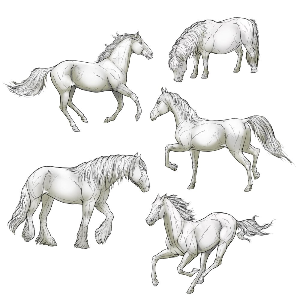how-to-draw-horses-step-by-step-11