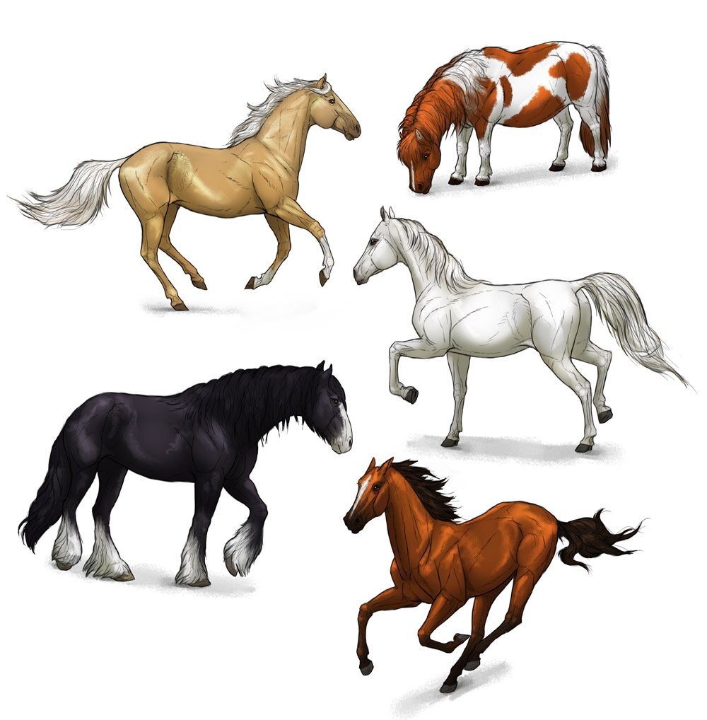 how-to-draw-horses-step-by-step-13