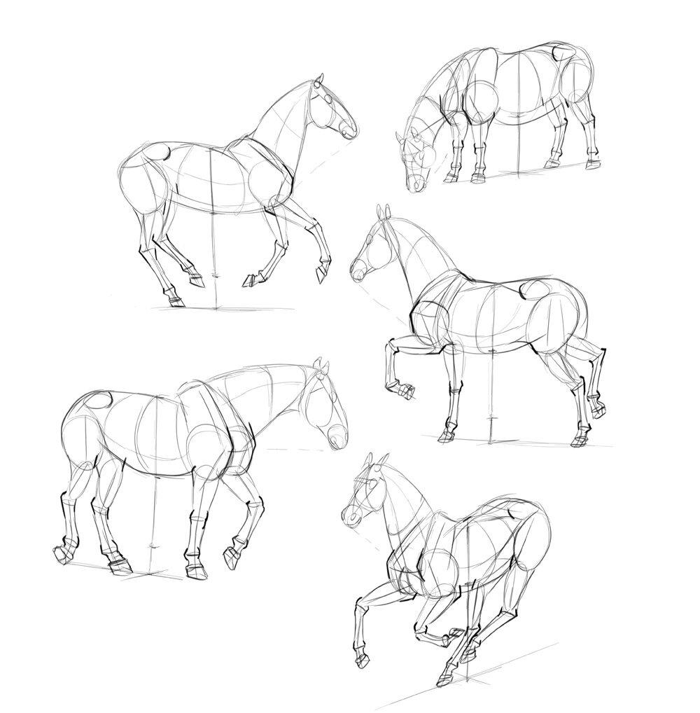 Sketchbook Original How To Draw Horses Monika Zagrobelna