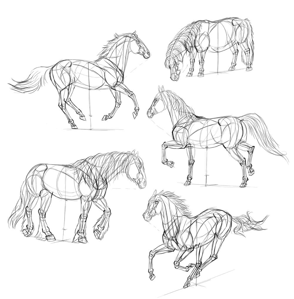 how-to-draw-horses-step-by-step-8