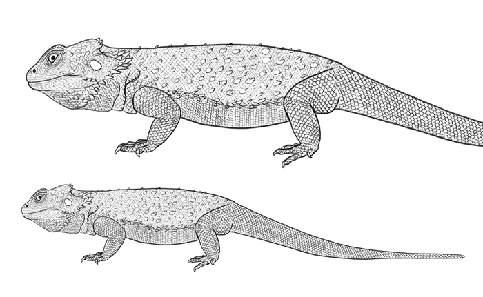 Dragon Scales Drawing Reference