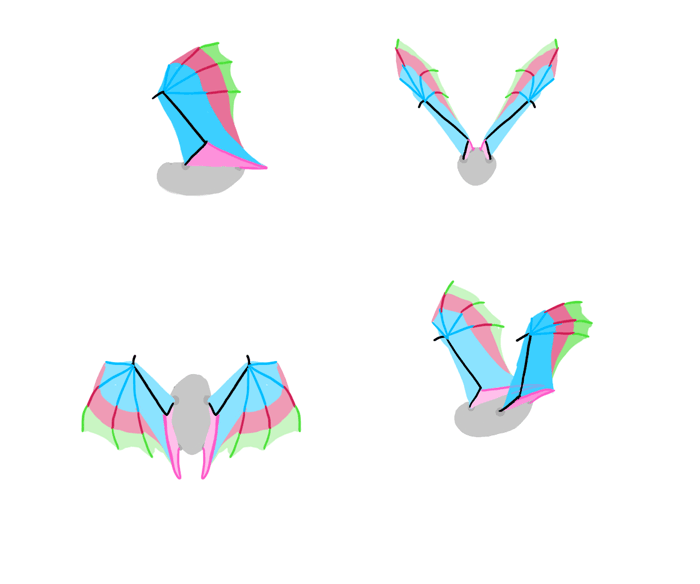 how-to-draw-wings-bat-fligh-frames-1