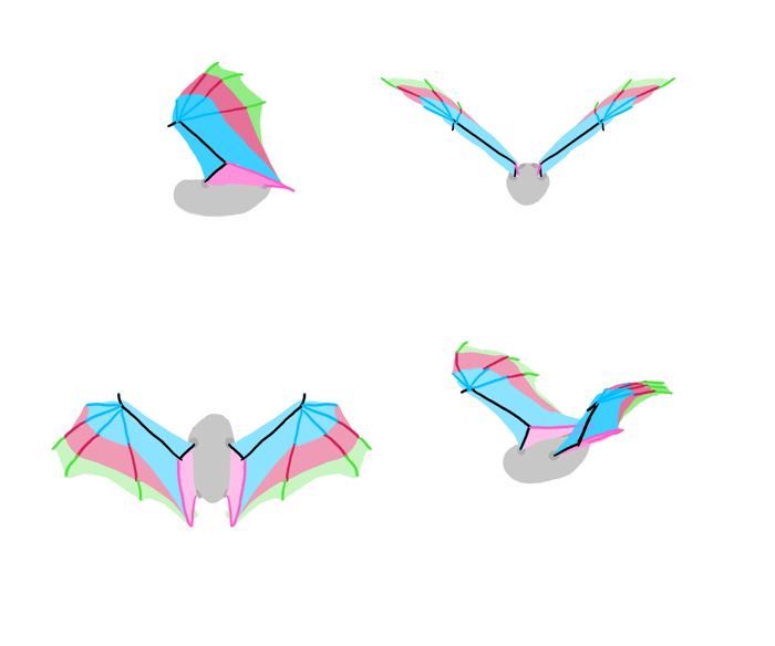 how-to-draw-wings-bat-fligh-frames-2