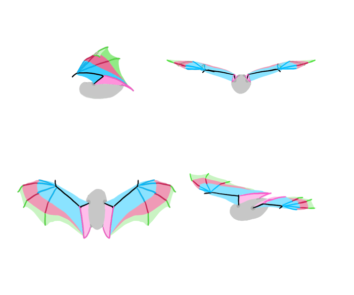 how-to-draw-wings-bat-fligh-frames-3
