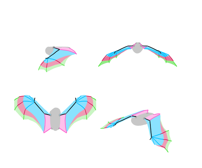 how-to-draw-wings-bat-fligh-frames-5