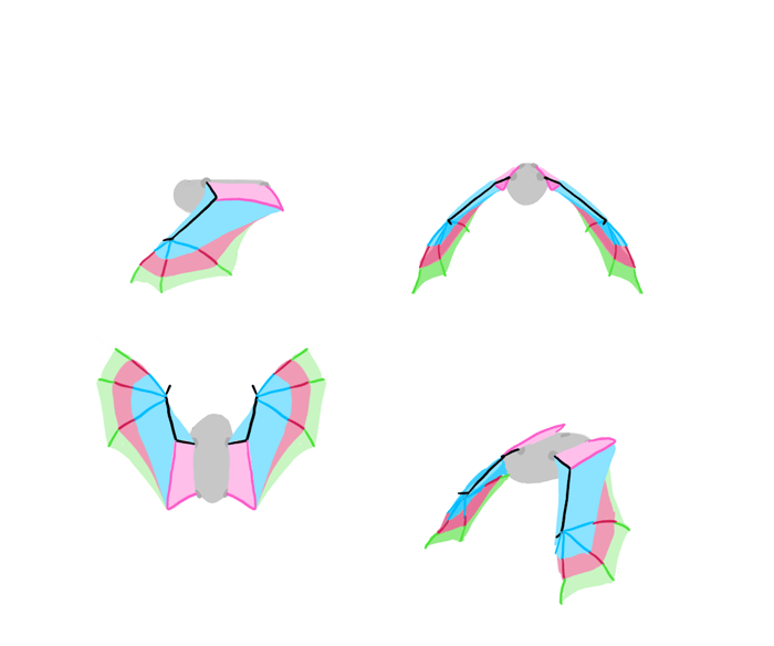 how-to-draw-wings-bat-fligh-frames-6