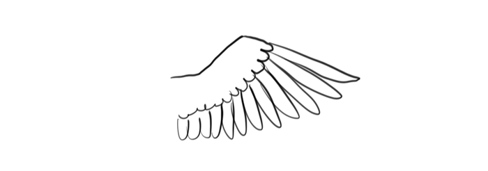 how-to-draw-wings-mistakes-bird-2