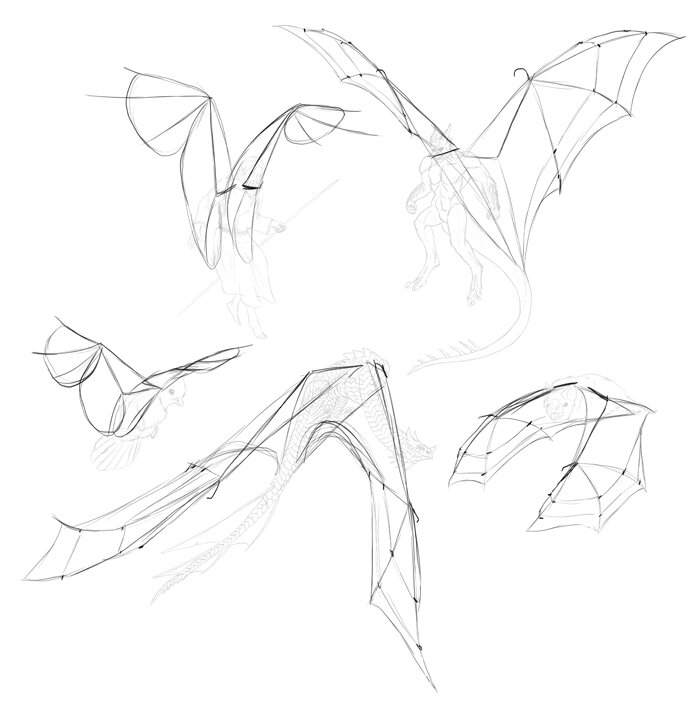 how-to-draw-wings-step-by-step-7