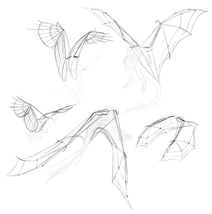 how-to-draw-wings-step-by-step-8