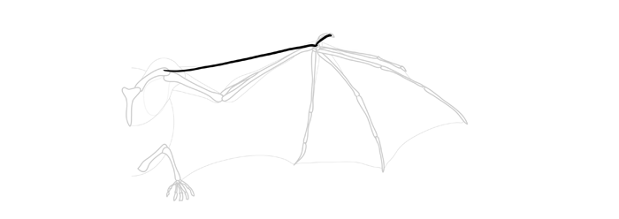 how-to-draw-wings-wing-bat-step-by-step-1