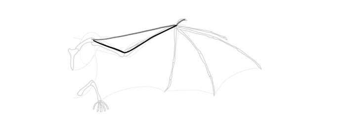 how-to-draw-wings-wing-bat-step-by-step-2