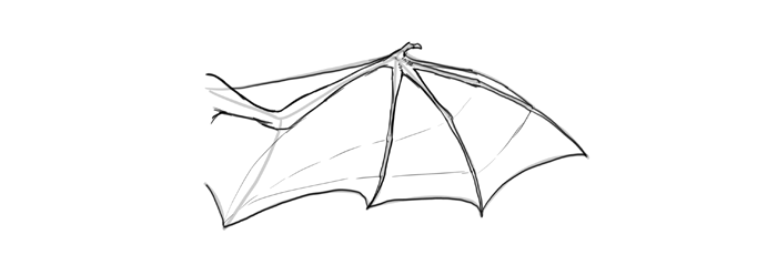 how-to-draw-wings-wing-bat-step-by-step-8